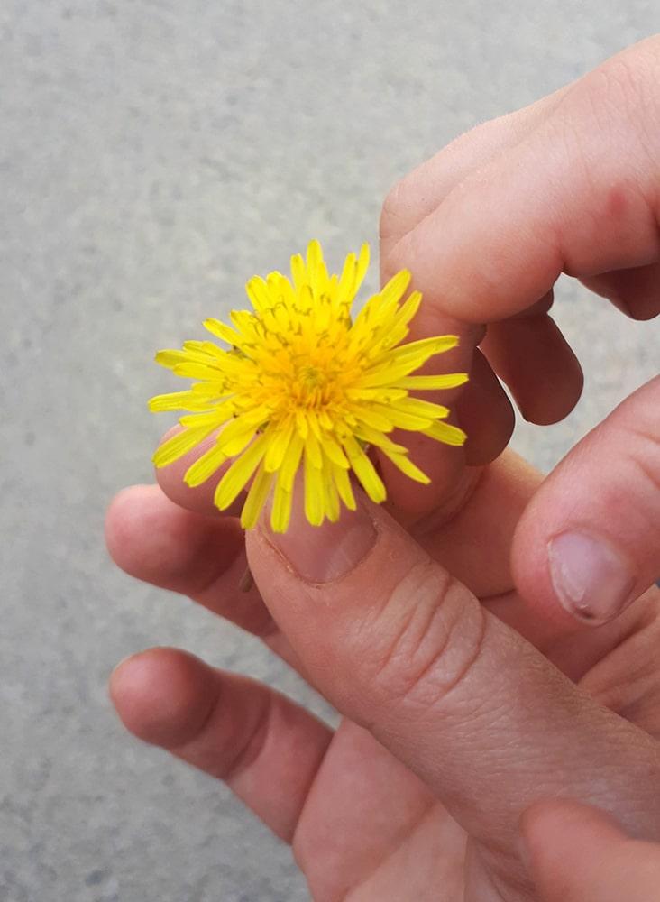 Picking flowers together, Spring 2019