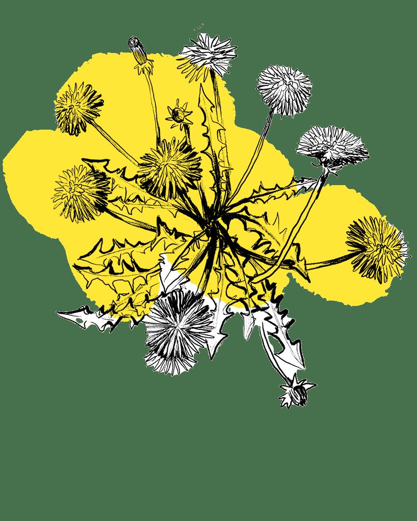 Blooms sketch, Amanda White (2020)