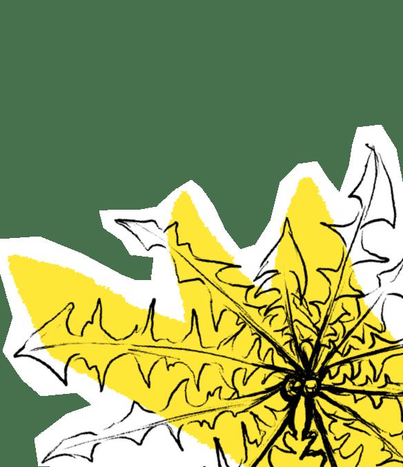 Leaves sketch, Amanda White (2020)